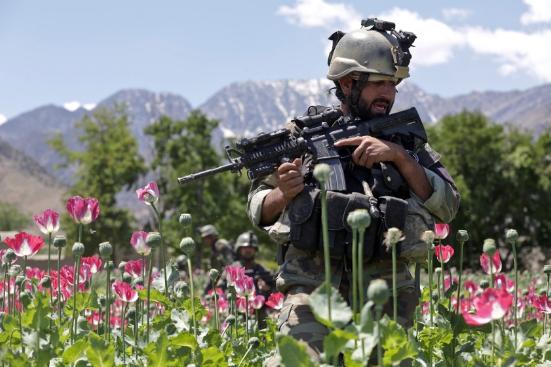 ارتفاع انتاج الأفيون 55% في أفغانستان