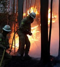 Huge forest fires in Portugal kill 62