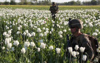US Spent Nearly $9 Billion to Fight Afghan Illicit Drugs, Says SIGAR