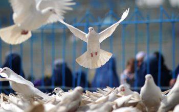 صلح در افغانستان آرزوی دست نیافتنی نیست