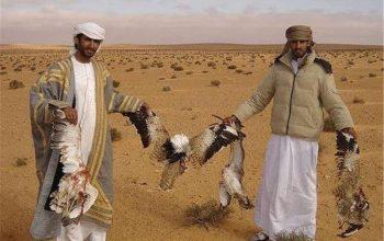 پرنده های کمیاب فراه در برابر پروژه های انکشافی
