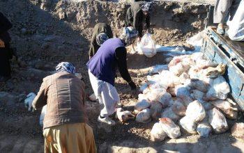 2500کیلوگرام گوشت مرغ از بین برده شد