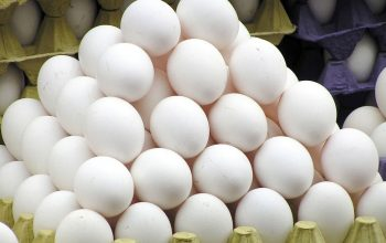 تخم مرغ دانه ای هشت افغانی توزیع می شود