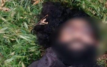 سرگروه طالبان در فرخار کشته شد